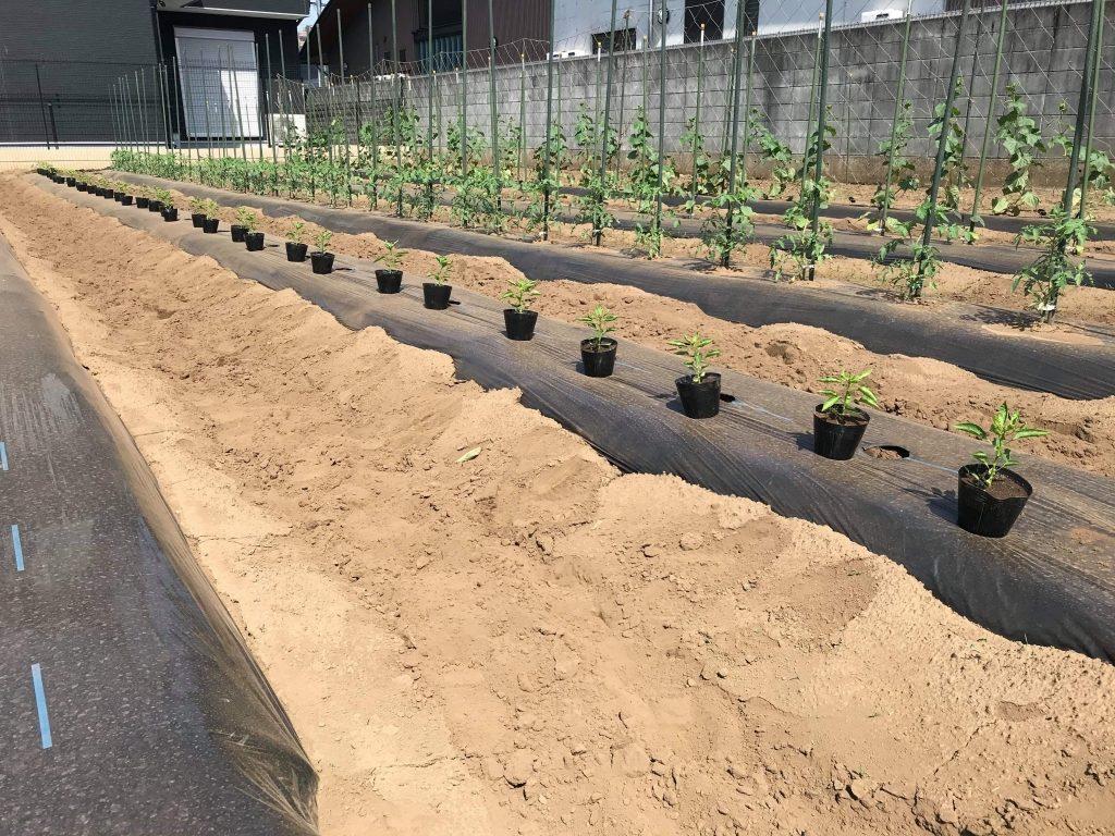 梅雨入り前の駆け込み農作業